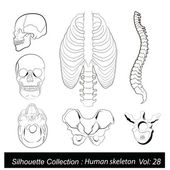 Vector Illustration: Human skeleton — Stock Vector