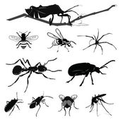 Vector Illustration: Insect collection isolated on white — Stock Vector