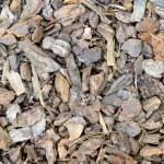 Tree bark chips — Stock Photo