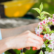 Pruning a flower - Stock Photo