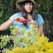 Womgardening — Stock Photo #12731230