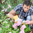 Man caring garden — Stock Photo