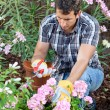 Male home gardener - Stockfoto
