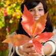 Cute autumn — Stock Photo