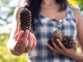Offering choice with pine cone — Stock Photo