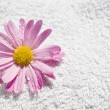 Spa delicate wet flower and towel - Stock Photo