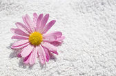 Spa delicate wet flower and towel — Stock Photo