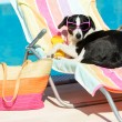 Funny dog sunbathing on summer — Stock Photo