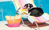 Funny dog sunbathing on summer — Stock Photo