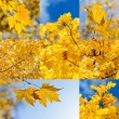 Autumn nature backgrounds — Stock Photo