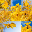 Autumn nature backgrounds — Foto de Stock