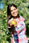 Female farmer harvesting pear fruit — Stock Photo