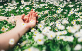 Female hands and flowers for relax concept — Stock Photo