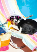 Funny dog resting on summer vacation at swimming pool — Stock Photo