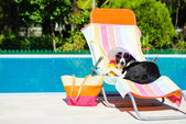 Funny dog resting on summer vacation — Stock Photo