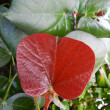 Stock Photo: Green and red wet leaves