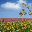 Spring Flower Field - Stock Photo