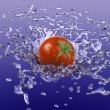 Tomato Splash - Stock Photo