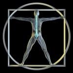Vatruvian Man & Spine — Stock Photo