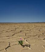 Desert Bloom — Stock Photo