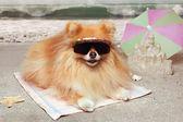 Dog beach — Stock Photo