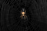 Spider and Web — Stock Photo