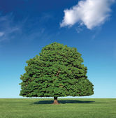 Perfect tree and blue sky — Stock Photo