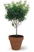 Potted Tree — Stock Photo