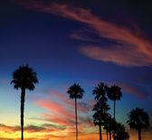 Palm Tree Sunset — Stock Photo