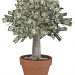albero di soldi nel pot di fiore — Foto Stock