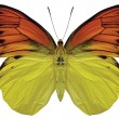 Orange and Yellow Butterfly - Stock Photo
