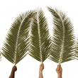 palm sunday — Stock Photo
