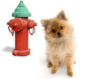 Dog and Hydrant — Stock Photo