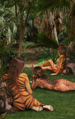 ジャングル — ストック写真