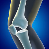Knee Xray — Stock Photo