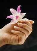 Fransız manikürlü tırnaklar — Stok fotoğraf
