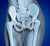 Medical Illustration Pelvis Region — Stock Photo