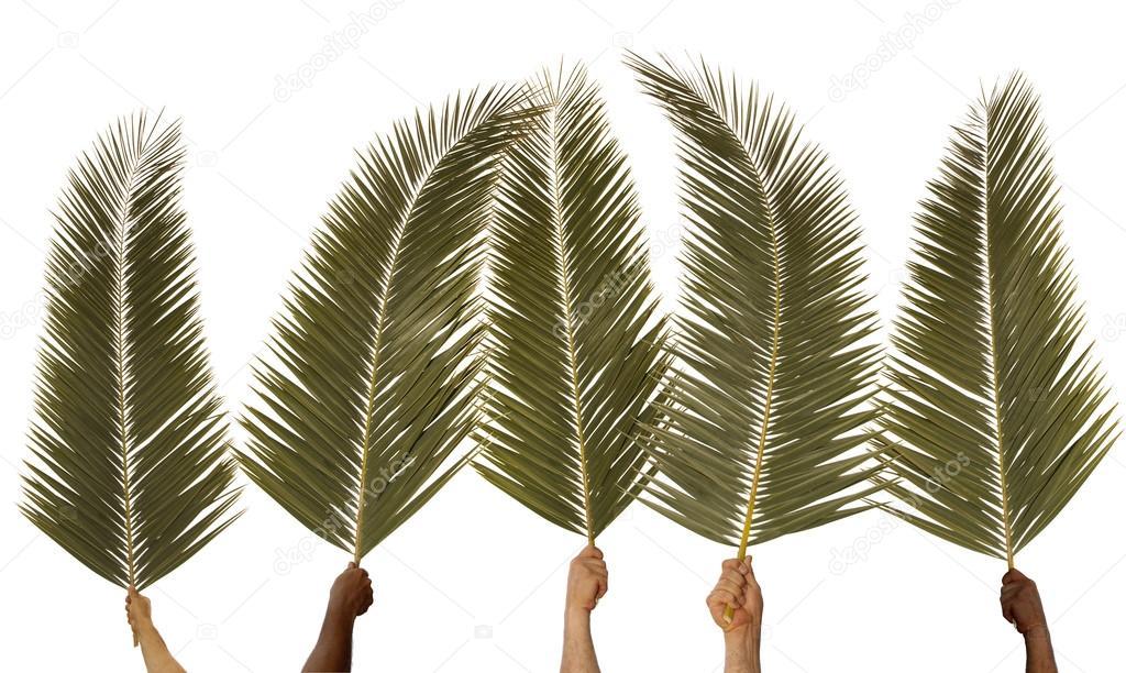 Resultado de imagem para domingo de ramos