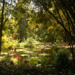 Pond and Bamboo Forrest - Foto Stock