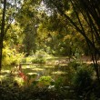 Pond and Bamboo Forrest - Stock Photo