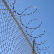 Razor wire fence — Photo