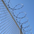 Razor wire fence — Stock Photo