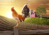Bauernhof frischen morgen — Stockfoto