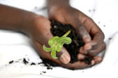 Childs hands holding a plant — Stock Photo
