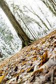 Autumn leaves closeup — Stock Photo