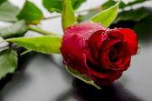 黑色背景上的红玫瑰 — 图库照片