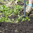 Stock Photo: Hoeing in the garden