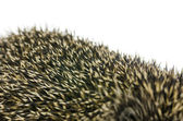 Closeup bodliny ježka — Stock fotografie