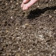 Stock Photo: Sowing