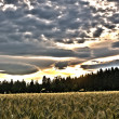 Beautiful sky over wheat field — Stock Photo